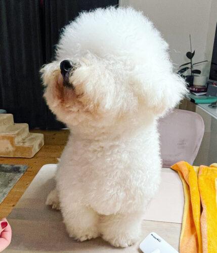 Hunde blower dobbeltmotor større hunde RØD photo review
