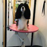 Hundetrimmebord hydraulik rundt galge + udstyrsstang PINK photo review