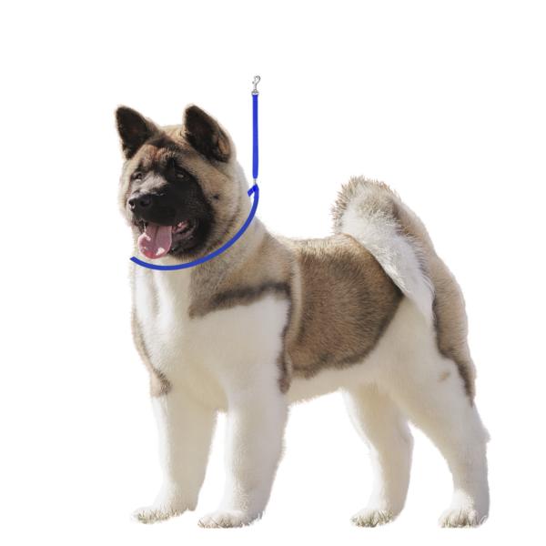 Trimmebord galgesnor koboltblå til hund med-karabinhage