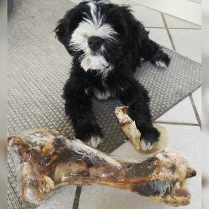 Jumbo oksebens knogle til store hunderacer