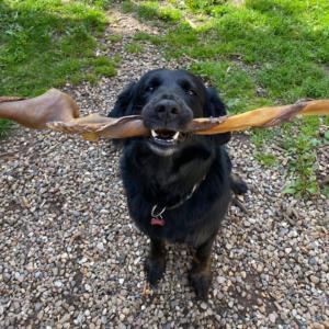 Naturlig hunde snack uden tilsætningsstoffer 70cm
